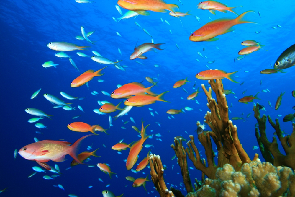 bigstock-Beautiful-Tropical-Fish-on-a-C-26725607